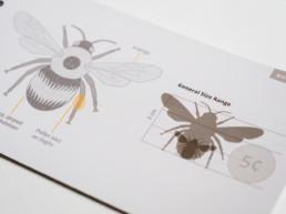 Pollinators of British Columbia: A Visual Guide